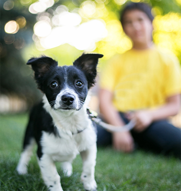 California Casualty offers Pets Best pet insurance